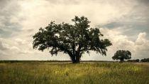 true-detective-tree